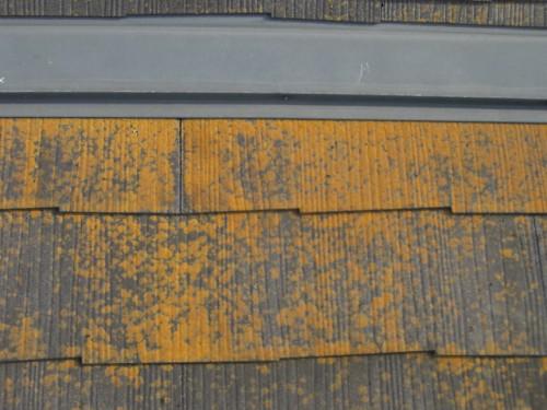 屋根に生えた苔の写真
